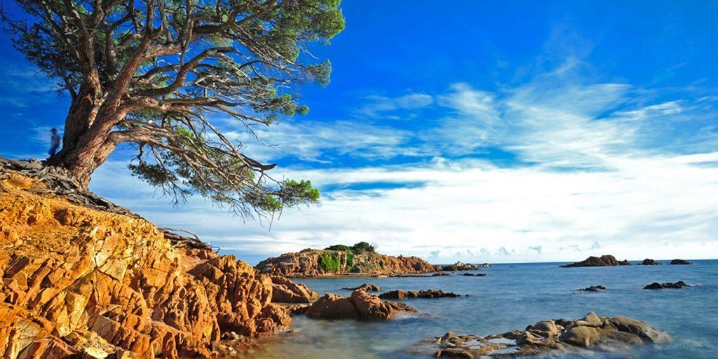 Corsica Frankrijk kust naaldboom rotsen zee
