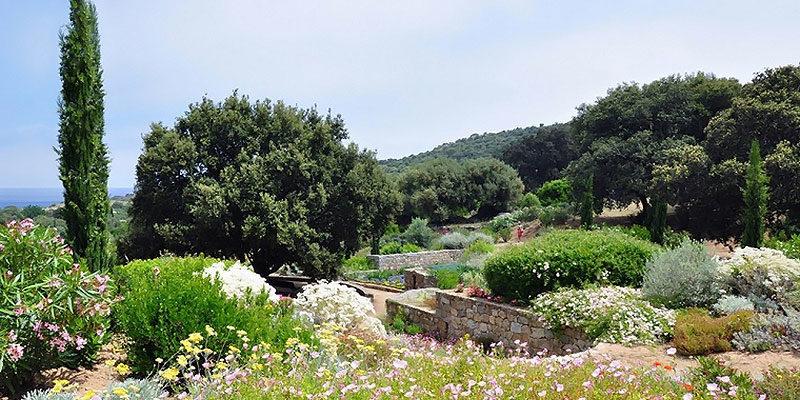 Parc de Saleccia Balagne Corsica Frankrijk maquis bloemen planten cypres