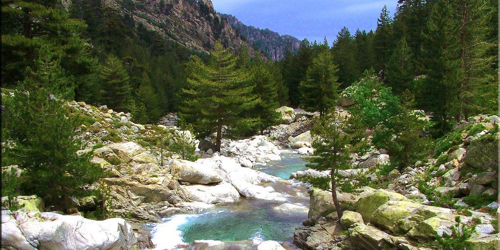 Restonica Corte Corsica Frankrijk rivier rotsen naaldbomen