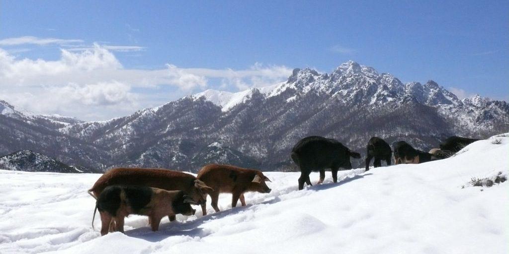 Boutique Hotel Artemisia Bastelica Corsica Frankrijk Val d'Ese skigebied sneeuw wilde-zwijnen