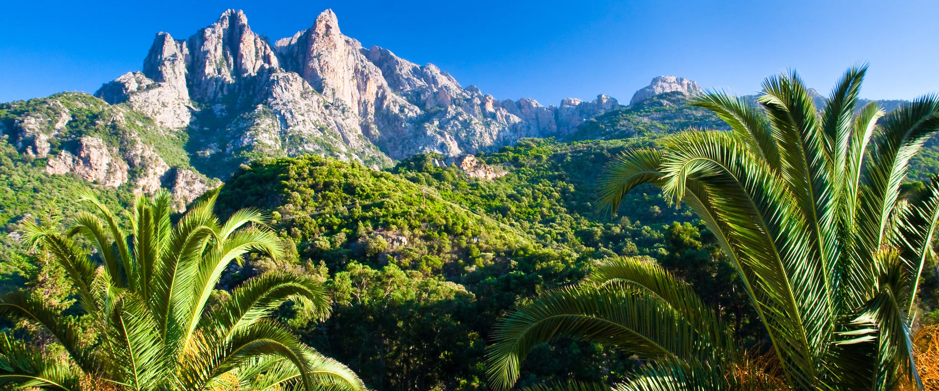 Corsica Frankrijk bergen palmbomen maquis heuvels blauwe-lucht zonnig