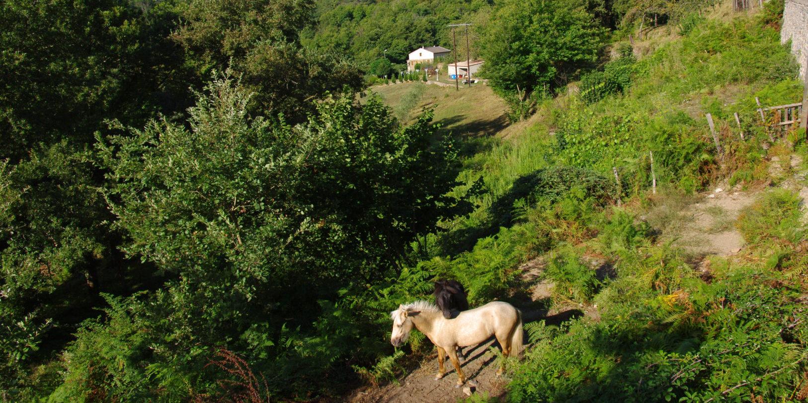 Castagniccia Corsica Frankrijk oost-Corsica