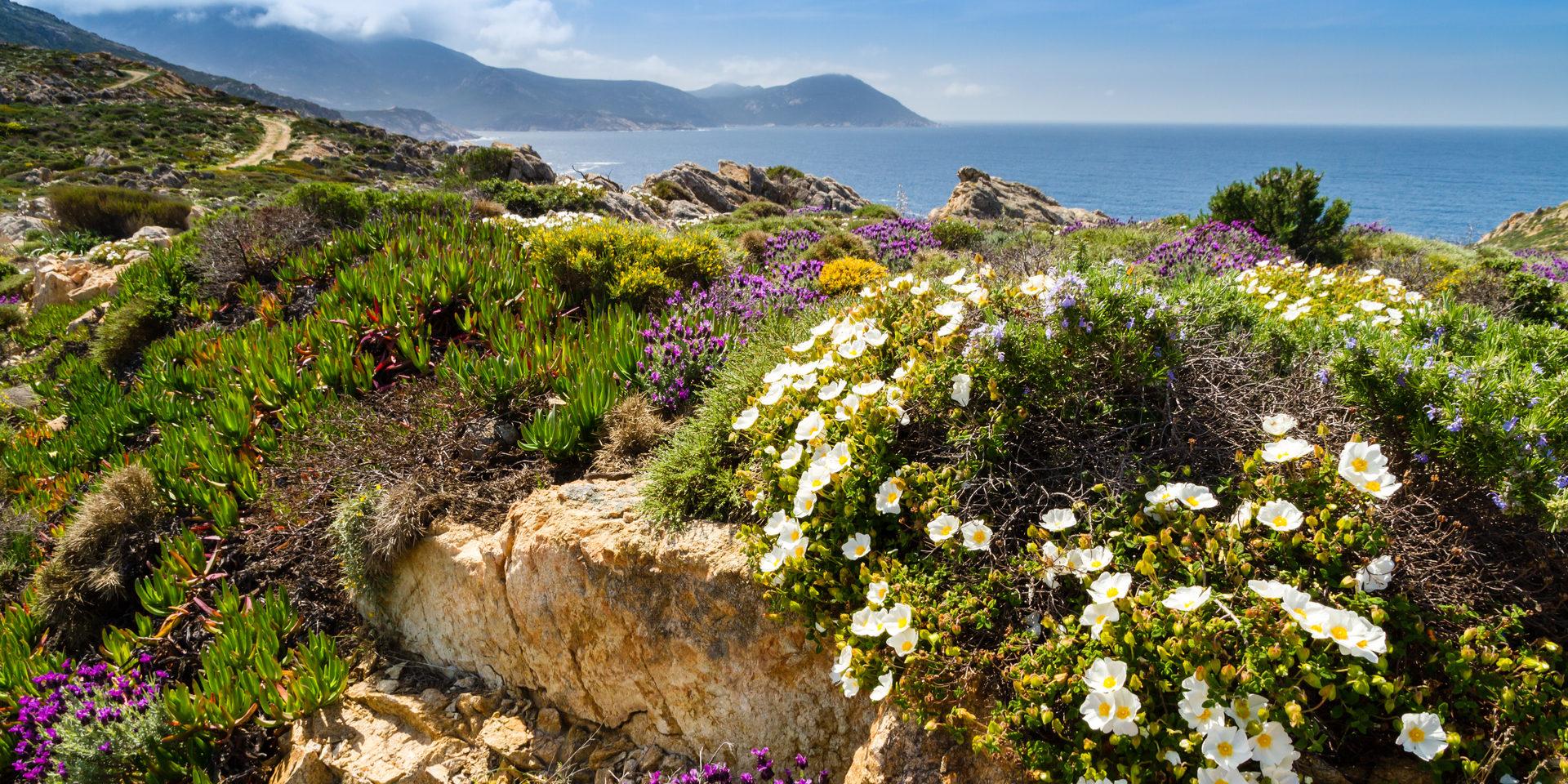 La-Revelata Balagne Calvi Corsica Frankrijk