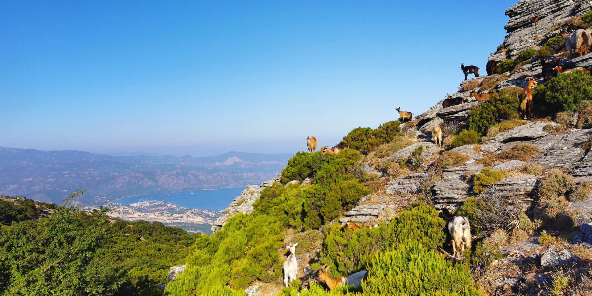 Serra-di-Pigno Bastia Corsica Frankrijk